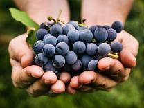 12 najvažnijih koristi konzumiranja grožđa – prvi deo